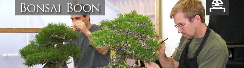 Bonsai Boon Bonsai Educational Classes A Student S Report